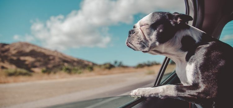 Moving from Arizona to New York with your pet: how to make it work